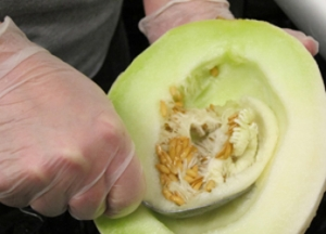 Worker scooping seeds out of a melon